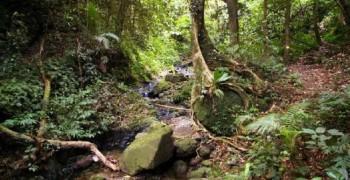 Randonnée  sportive : Grand rivière / Précheur