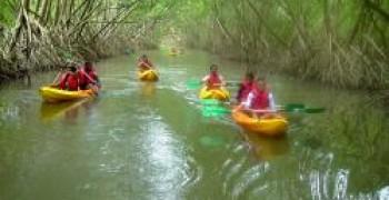 Visite de la mangrove en kayak