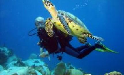 Quelques spots de plongée du Nord de l'île:Récif du sous marin : 0 -  20 mètres. Tous niveaux