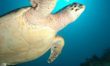 La plongée martiniquaise:Espace Plongée Martinique