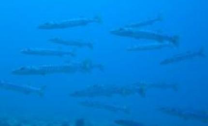 Quelques spots de plongée du Nord de l'île. :L'îlets la Perle : 0 - 60 mètres. Tous niveaux