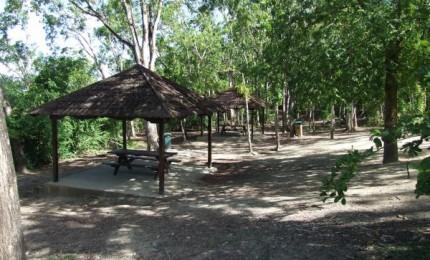 Forêt de Vatable