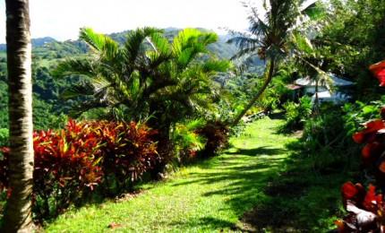 Bungalow, jardin, potager bio et forêt privée !